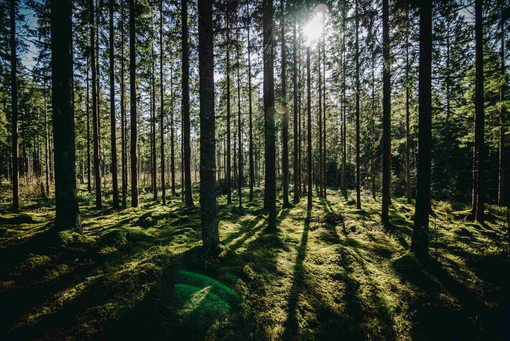 forest bathing lesný kúpeľ deti v prírode terapia lesom 100% prírodná liečba